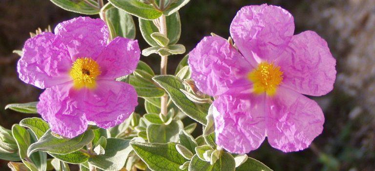 La primavera a través de la flora del noroeste